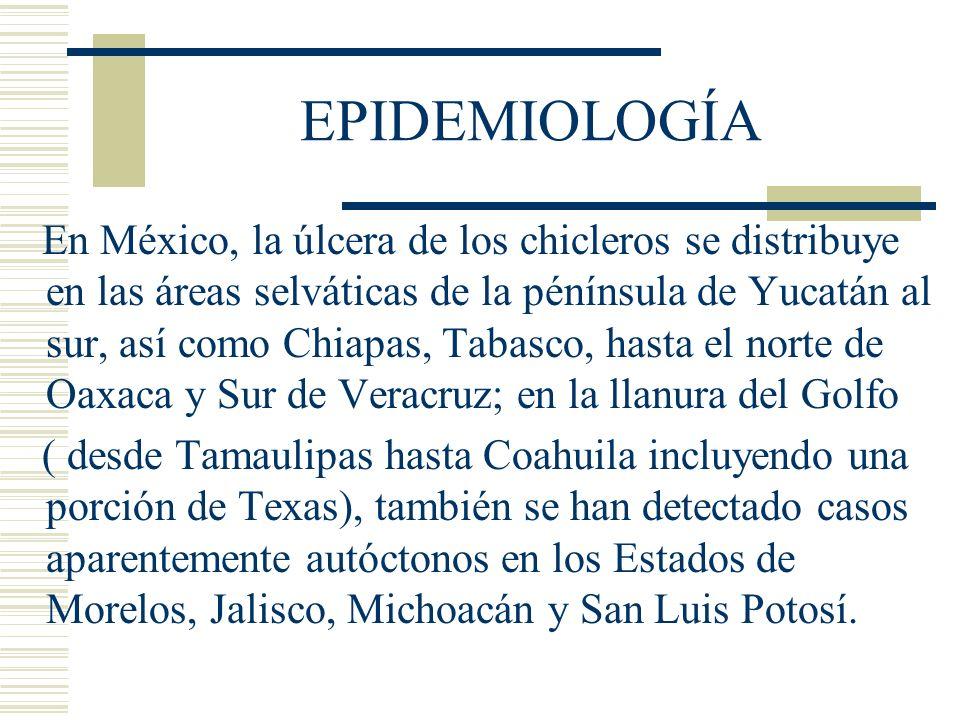 EPIDEMIOLOGÍA En México, la úlcera de los chicleros se distribuye en las áreas selváticas de la pénínsula de Yucatán al sur, así como Chiapas, Tabasco, hasta el norte de Oaxaca y Sur de Veracruz; en la llanura del Golfo ( desde Tamaulipas hasta Coahuila incluyendo una porción de Texas), también se han detectado casos aparentemente autóctonos en los Estados de Morelos, Jalisco, Michoacán y San Luis Potosí.