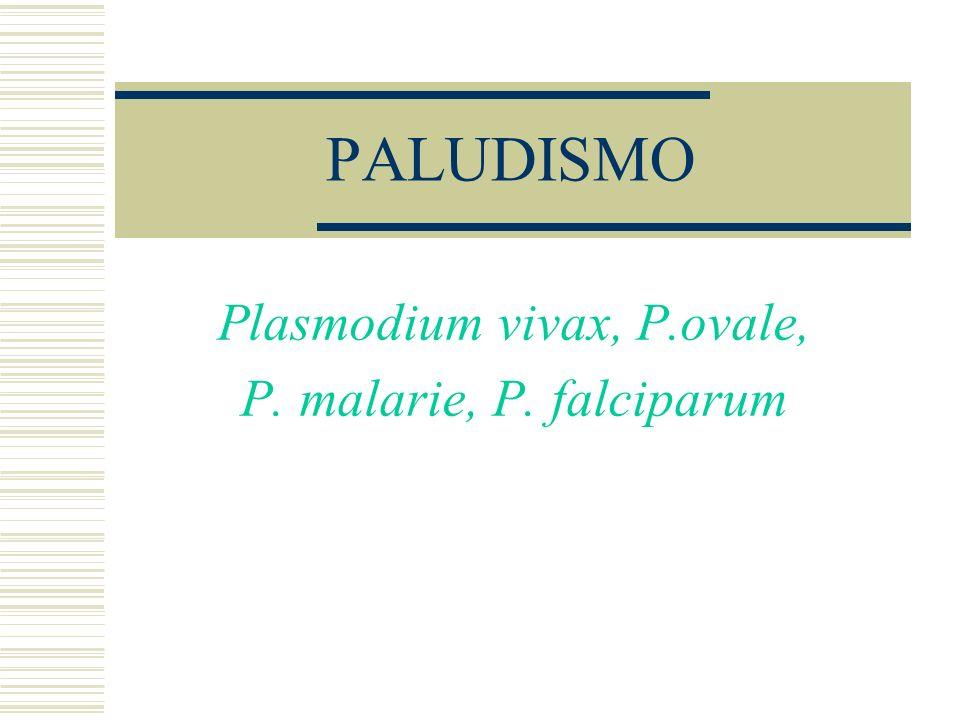 PALUDISMO Plasmodium vivax, P.ovale, P. malarie, P. falciparum