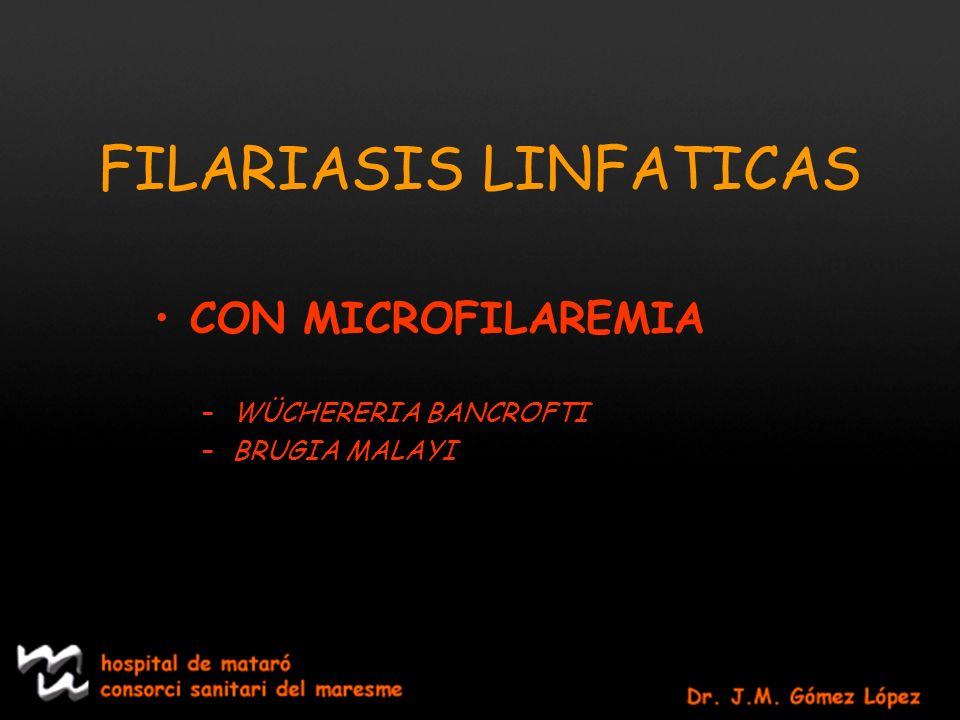 FILARIASISLINFATICAS CON MICROFILAREMIA –WÜCHERERIA BANCROFTI –BRUGIA MALAYI