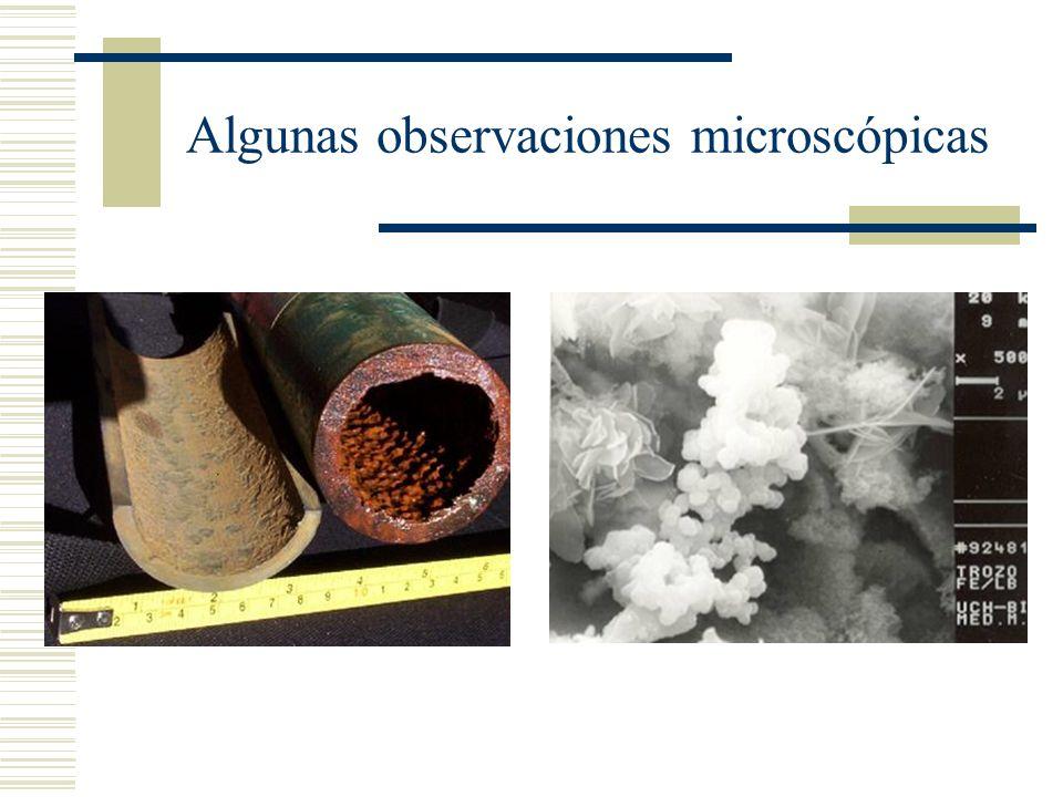 Vigilar la presencia de microorganismos
