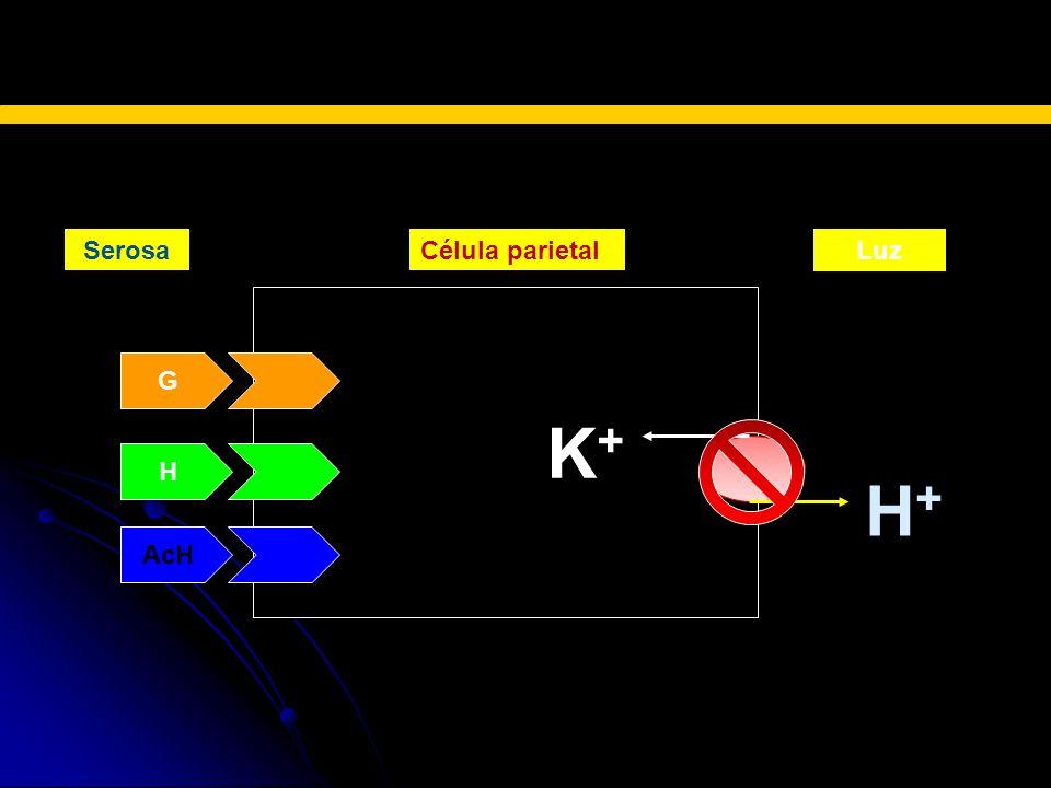 SerosaCélula parietalLuz K + G H AcH H+H+ BLOQUEADORES H2