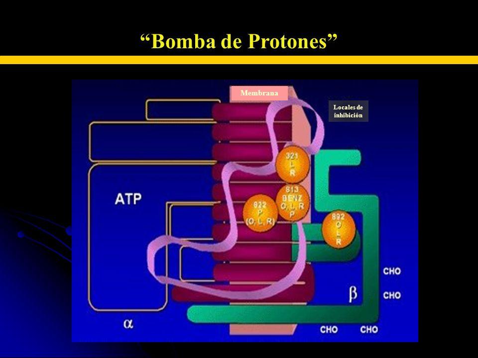 INHIBIDORES DE LA BOMBA DE PROTONES Bomba de Protones Locales de inhibición Membrana