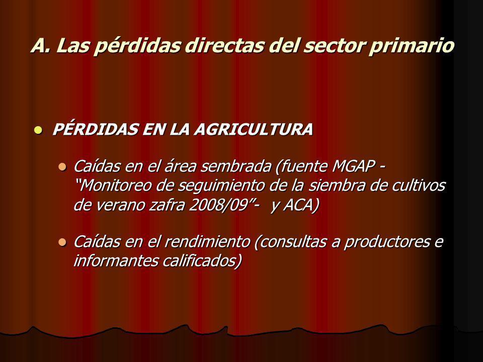 A. Las pérdidas directas del sector primario PÉRDIDAS EN LA AGRICULTURA PÉRDIDAS EN LA AGRICULTURA Caídas en el área sembrada (fuente MGAP - Monitoreo