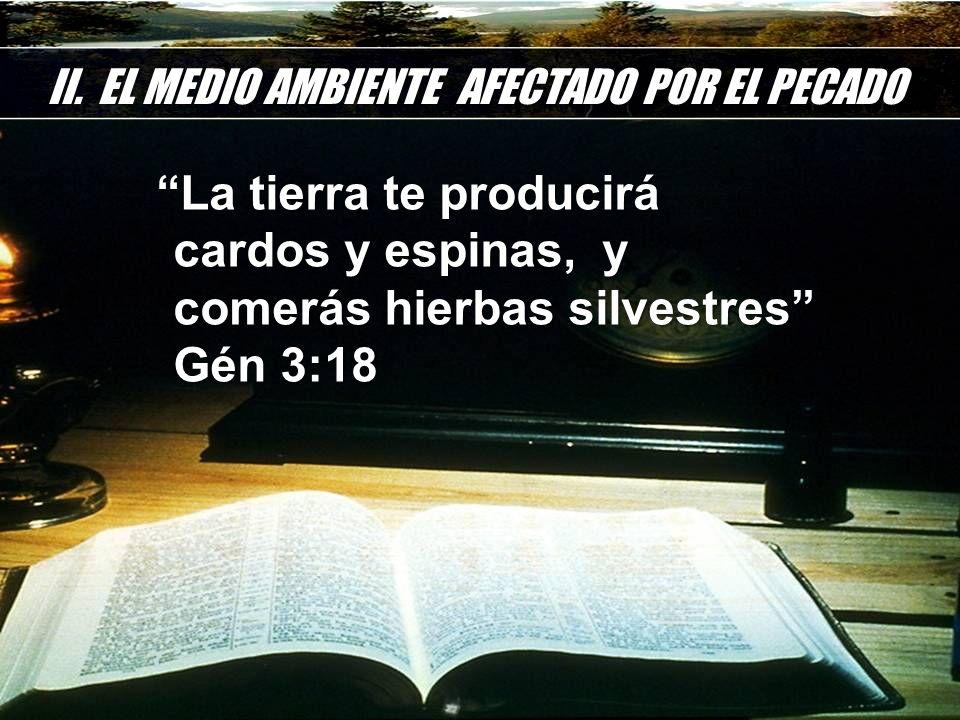 II. EL MEDIO AMBIENTE AFECTADO POR EL PECADO La tierra te producirá cardos y espinas, y comerás hierbas silvestres Gén 3:18