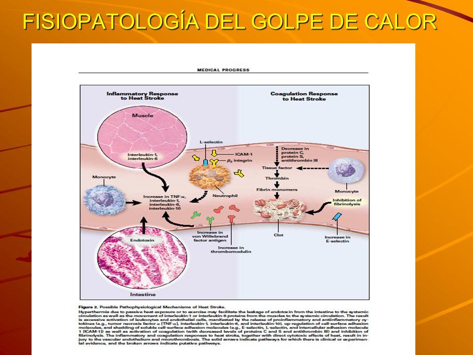 GOLPE DE CALOR CLÁSICO = PASIVO O EPIDÉMICO POR EXPOSICIÓN AL CALOR AMBIENTAL SE DESARROLLA EN VARIOS DÍAS EN NIÑOS Y ANCIANOS 80% DE CASOS EN >65 AÑOS.