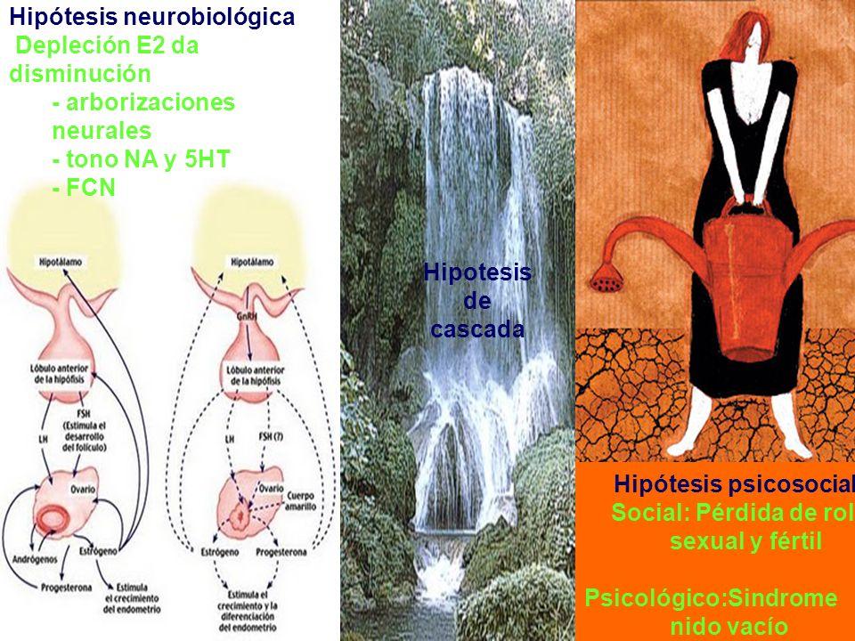 Hipótesis neurobiológica Depleción E2 da disminución - arborizaciones neurales - tono NA y 5HT - FCN Hipótesis psicosocial Social: Pérdida de rol sexu