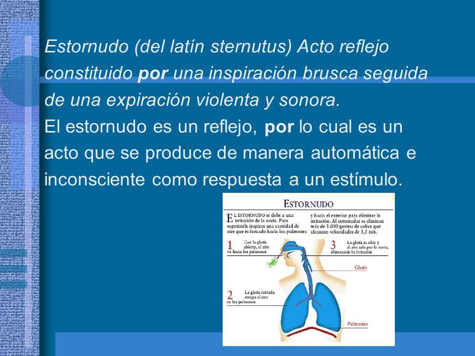 Normalmente estornudamos porque la mucosa nasal se irrita, debido a elementos extraños en las vias respiratorias.