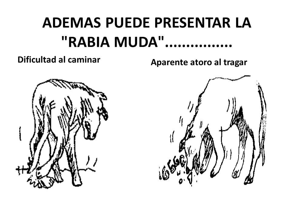 ADEMAS PUEDE PRESENTAR LA