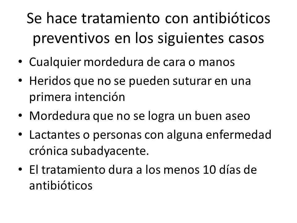 Se hace tratamiento con antibióticos preventivos en los siguientes casos Cualquier mordedura de cara o manos Heridos que no se pueden suturar en una p