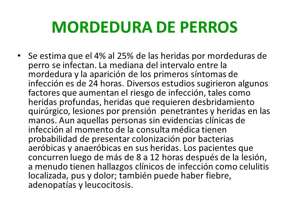 MORDEDURA DE PERROS Se estima que el 4% al 25% de las heridas por mordeduras de perro se infectan. La mediana del intervalo entre la mordedura y la ap
