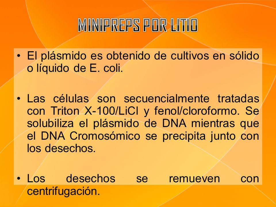 El plásmido es obtenido de cultivos en sólido o líquido de E. coli. Las células son secuencialmente tratadas con Triton X-100/LiCl y fenol/cloroformo.