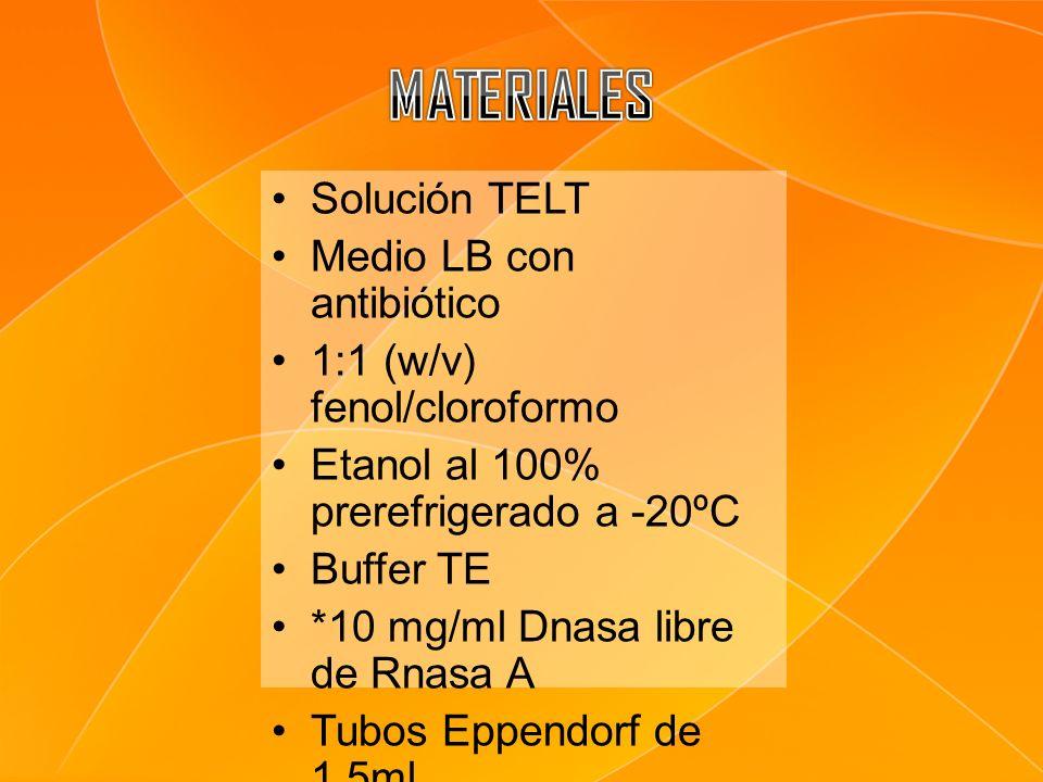 Solución TELT Medio LB con antibiótico 1:1 (w/v) fenol/cloroformo Etanol al 100% prerefrigerado a -20ºC Buffer TE *10 mg/ml Dnasa libre de Rnasa A Tub