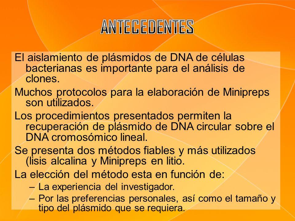 El aislamiento de plásmidos de DNA de células bacterianas es importante para el análisis de clones. Muchos protocolos para la elaboración de Minipreps