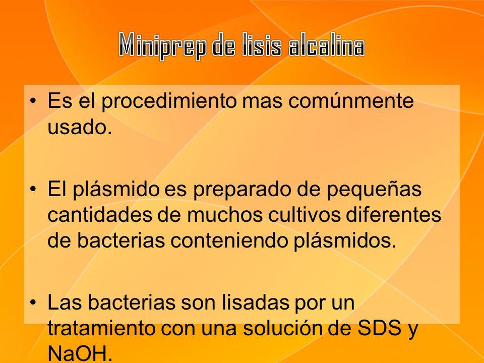 Es el procedimiento mas comúnmente usado. El plásmido es preparado de pequeñas cantidades de muchos cultivos diferentes de bacterias conteniendo plásm