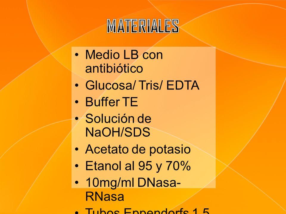 Medio LB con antibiótico Glucosa/ Tris/ EDTA Buffer TE Solución de NaOH/SDS Acetato de potasio Etanol al 95 y 70% 10mg/ml DNasa- RNasa Tubos Eppendorf