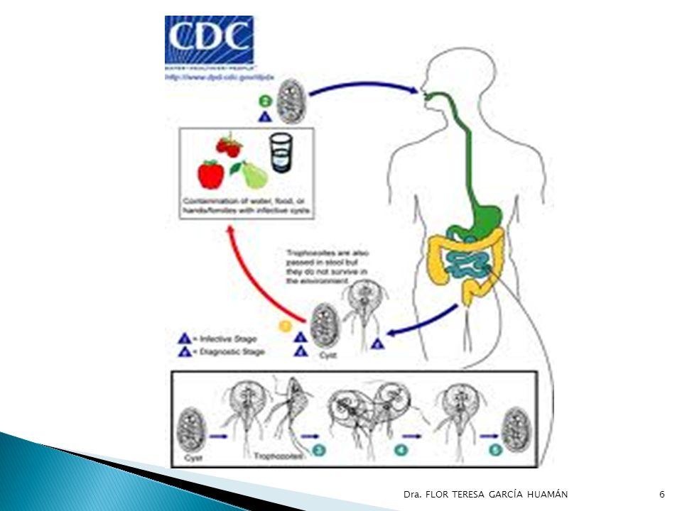 DEFINICIÓN La amebiasis es el desarrollo y reproducción de Entamoeba histolytica en el hombre.