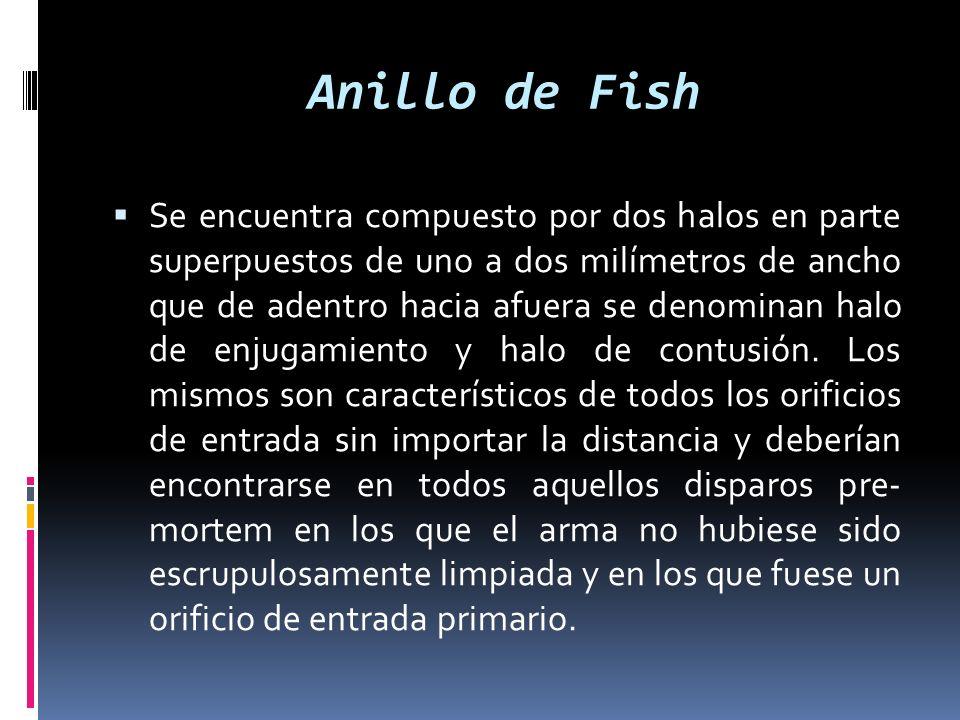 Anillo de Fish Se encuentra compuesto por dos halos en parte superpuestos de uno a dos milímetros de ancho que de adentro hacia afuera se denominan ha
