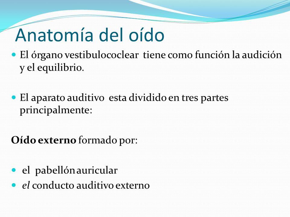 Anatomía del oído El órgano vestibulococlear tiene como función la audición y el equilibrio. El aparato auditivo esta dividido en tres partes principa