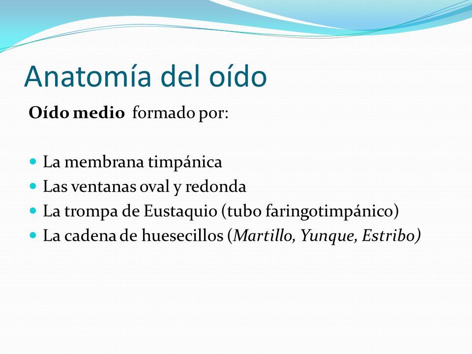 Anatomía del oído Oído medio formado por: La membrana timpánica Las ventanas oval y redonda La trompa de Eustaquio (tubo faringotimpánico) La cadena d