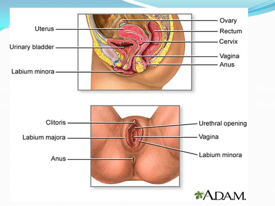 Administración de medicamentos por vía Vaginal EQUIPO: Bandeja.