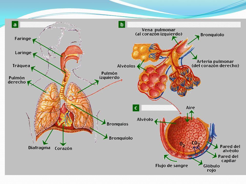 Administración de medicamentos por vía Respiratoria Existen tres tipos de medicamentos para la administración inhalada: los aerosoles (puff) Los nebulizadores los dispositivos de polvo seco.