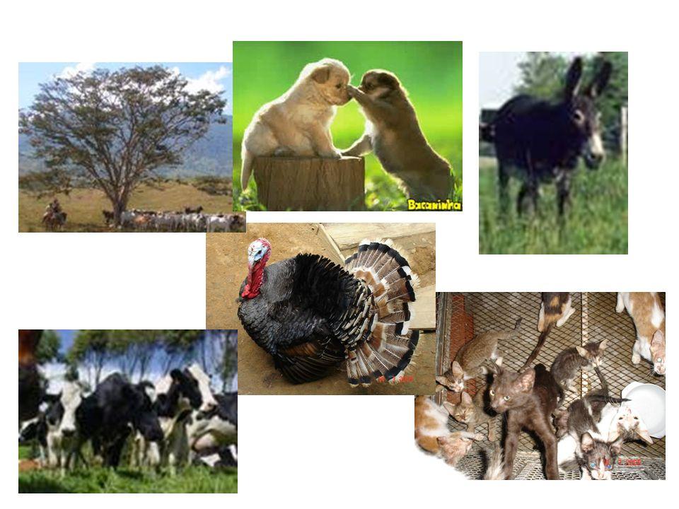 Municipio o Área libre de fauna silvestre en cautiverio