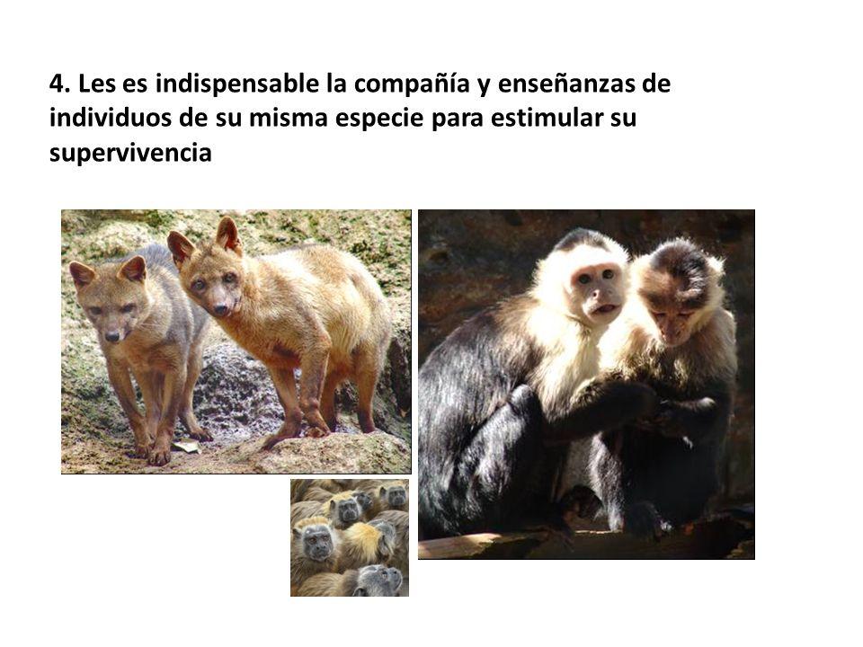 4. Les es indispensable la compañía y enseñanzas de individuos de su misma especie para estimular su supervivencia