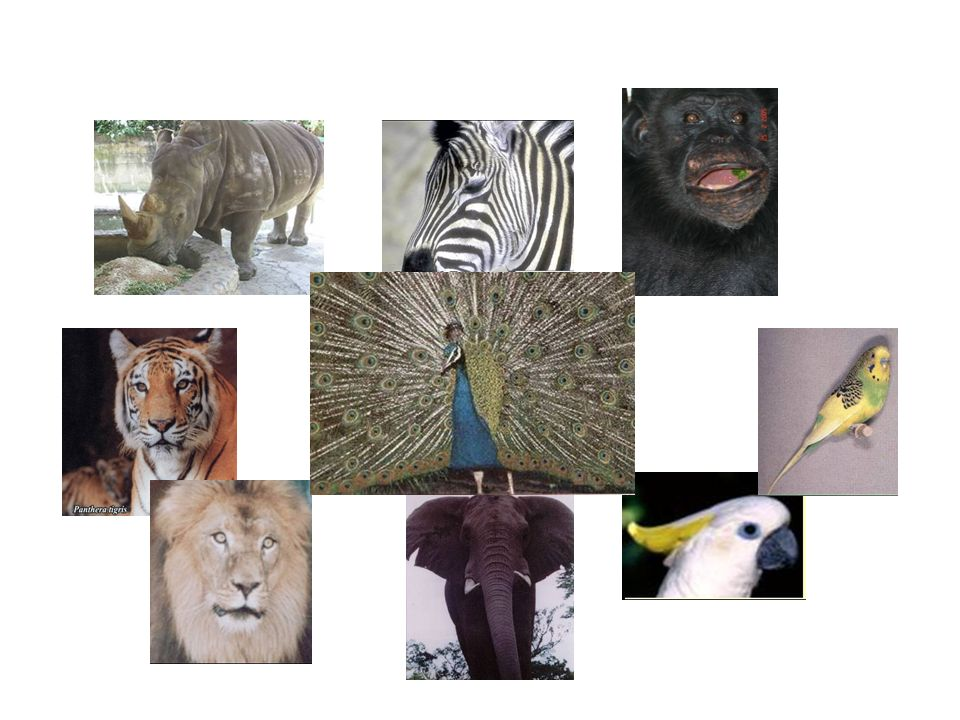 Conjunto de organismos vivos de especies animales terrestres y acuáticas, que no han sido objeto de domesticación, mejoramiento genético, cría regular o que han regresado a su estado salvaje Fauna Silvestre y Acuática Colombiana Ley 611 de 2000