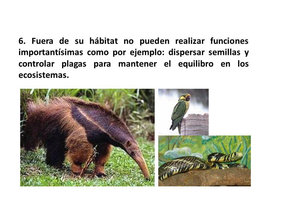 6. Fuera de su hábitat no pueden realizar funciones importantísimas como por ejemplo: dispersar semillas y controlar plagas para mantener el equilibro