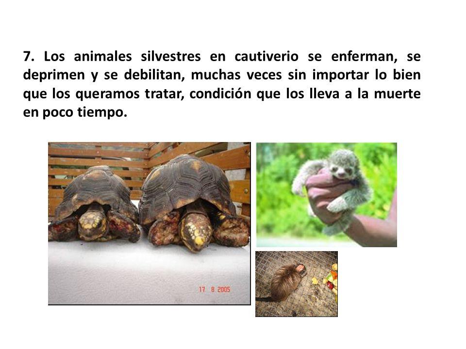 7. Los animales silvestres en cautiverio se enferman, se deprimen y se debilitan, muchas veces sin importar lo bien que los queramos tratar, condición