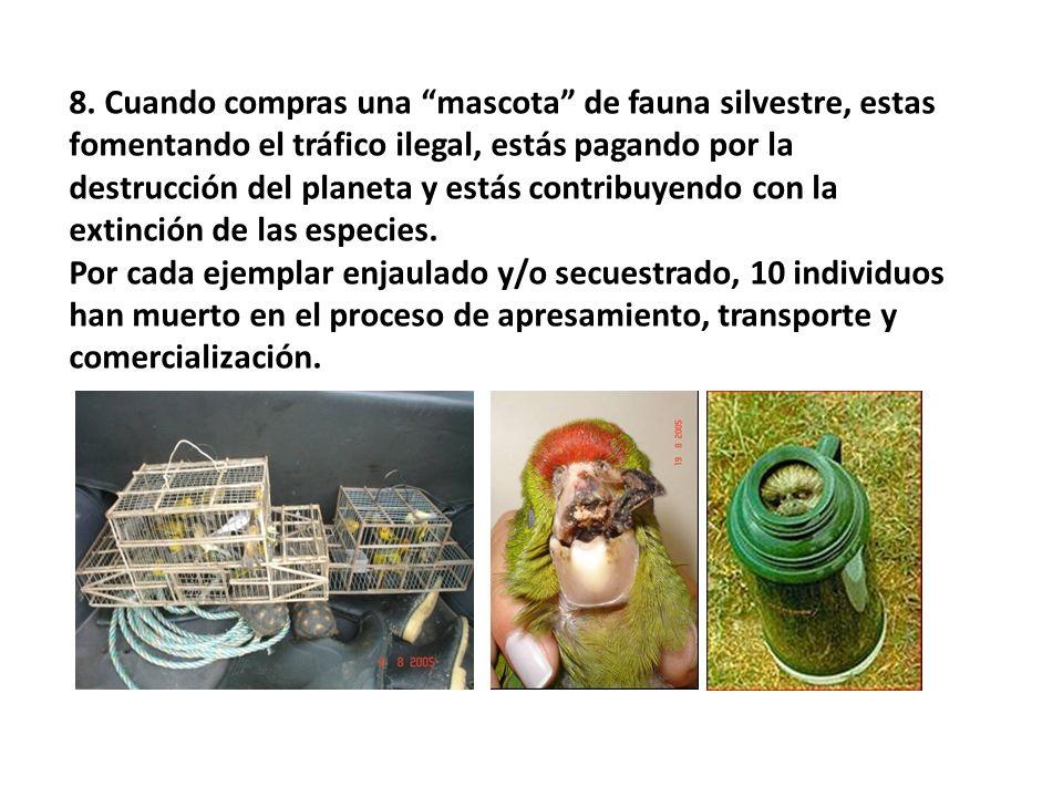 8. Cuando compras una mascota de fauna silvestre, estas fomentando el tráfico ilegal, estás pagando por la destrucción del planeta y estás contribuyen