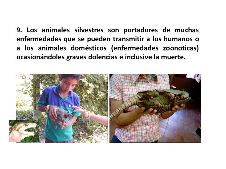 9. Los animales silvestres son portadores de muchas enfermedades que se pueden transmitir a los humanos o a los animales domésticos (enfermedades zoon