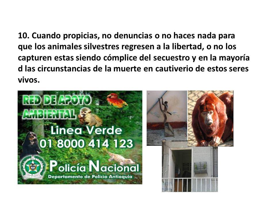 10. Cuando propicias, no denuncias o no haces nada para que los animales silvestres regresen a la libertad, o no los capturen estas siendo cómplice de