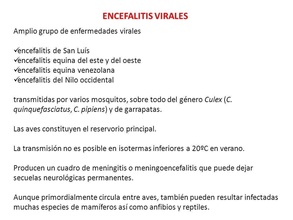 ENCEFALITIS VIRALES Amplio grupo de enfermedades virales encefalitis de San Luís encefalitis equina del este y del oeste encefalitis equina venezolana