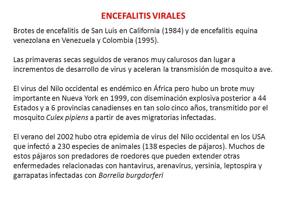 ENCEFALITIS VIRALES Brotes de encefalitis de San Luis en California (1984) y de encefalitis equina venezolana en Venezuela y Colombia (1995). Las prim