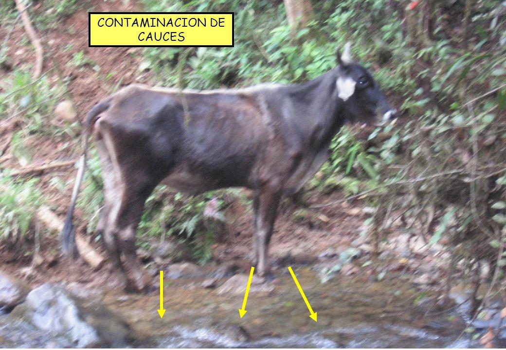 CONTAMINACION DE CAUCES