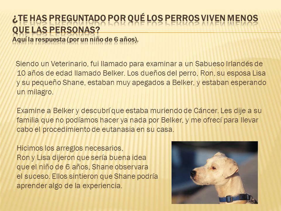 Siendo un Veterinario, fui llamado para examinar a un Sabueso Irlandés de 10 años de edad llamado Belker. Los dueños del perro, Ron, su esposa Lisa y