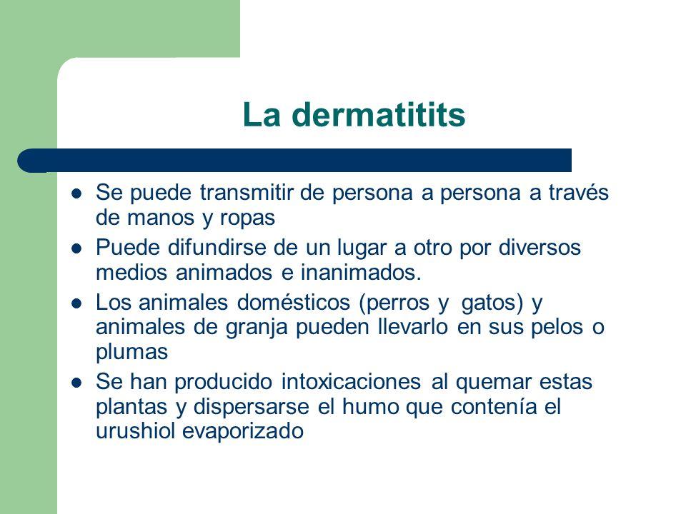 La dermatitits Se puede transmitir de persona a persona a través de manos y ropas Puede difundirse de un lugar a otro por diversos medios animados e inanimados.