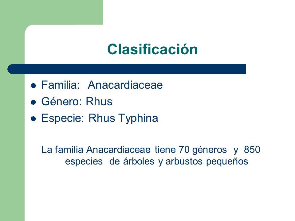 Clasificación Familia: Anacardiaceae Género: Rhus Especie: Rhus Typhina La familia Anacardiaceae tiene 70 géneros y 850 especies de árboles y arbustos pequeños