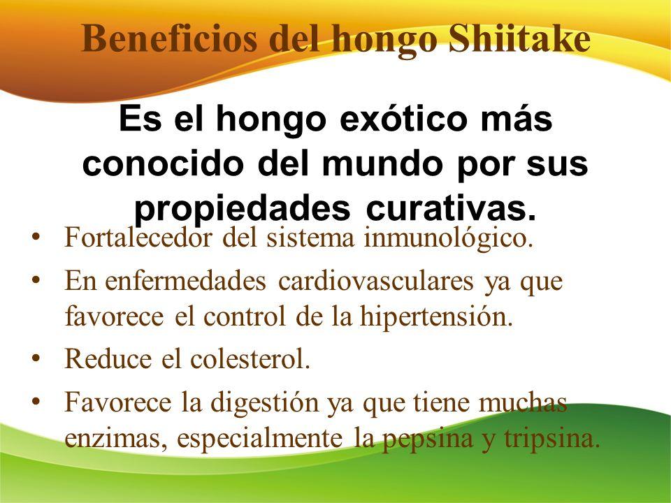 Beneficios del hongo Shiitake Fortalecedor del sistema inmunológico. En enfermedades cardiovasculares ya que favorece el control de la hipertensión. R
