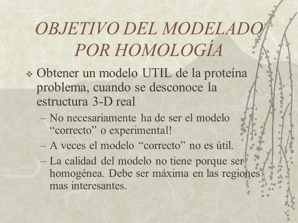 OBJETIVO DEL MODELADO POR HOMOLOGÍA Obtener un modelo UTIL de la proteína problema, cuando se desconoce la estructura 3-D real –No necesariamente ha de ser el modelo correcto o experimental.
