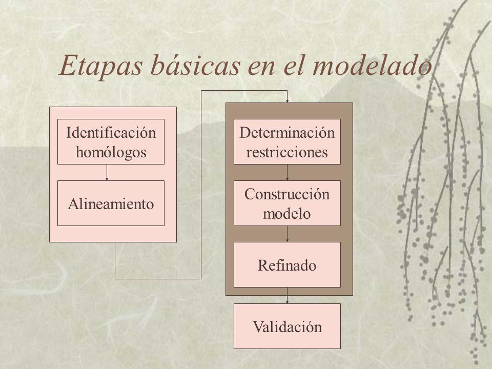 Identificación de homólogos La primera etapa es determinar homólogos de la proteína problema.