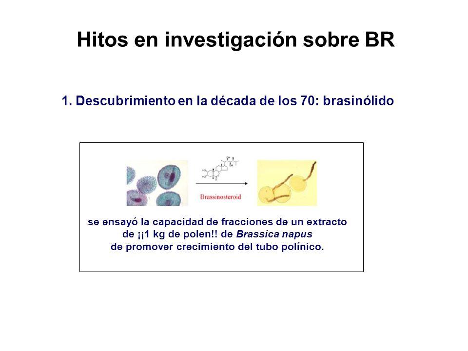 Hitos en investigación sobre BR 1. Descubrimiento en la década de los 70: brasinólido se ensayó la capacidad de fracciones de un extracto de ¡¡1 kg de