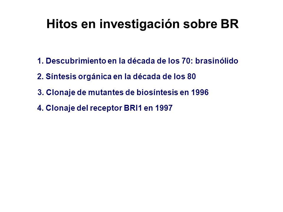 Hitos en investigación sobre BR 1. Descubrimiento en la década de los 70: brasinólido 2. Síntesis orgánica en la década de los 80 3. Clonaje de mutant