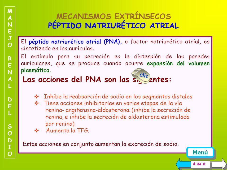ACTIVIDAD DE LOS NERVIOS SIMPATICOS MANEJO RENAL DEL SODIOMANEJO RENAL DEL SODIO La actividad de los nervios simpáticos también es importante en el ma