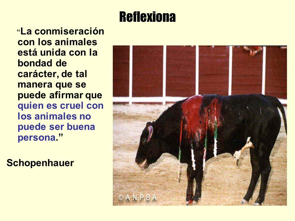 Reflexiona La conmiseración con los animales está unida con la bondad de carácter, de tal manera que se puede afirmar que quien es cruel con los animales no puede ser buena persona.