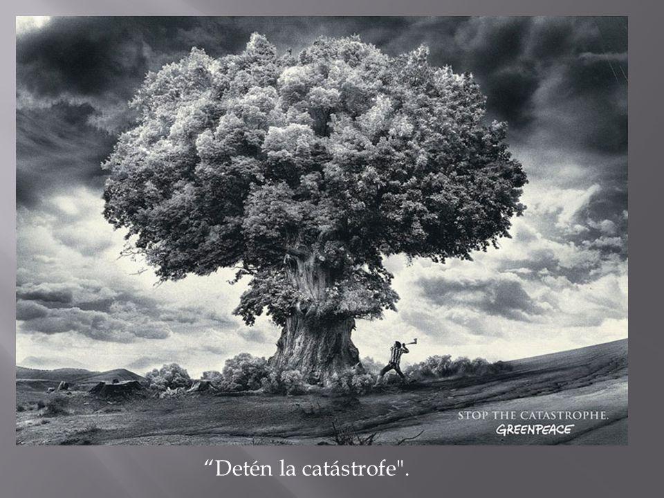 Detén la catástrofe .