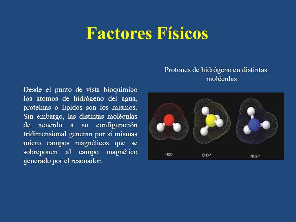 Factores Físicos Desde el punto de vista bioquímico los átomos de hidrógeno del agua, proteínas o lípidos son los mismos. Sin embargo, las distintas m