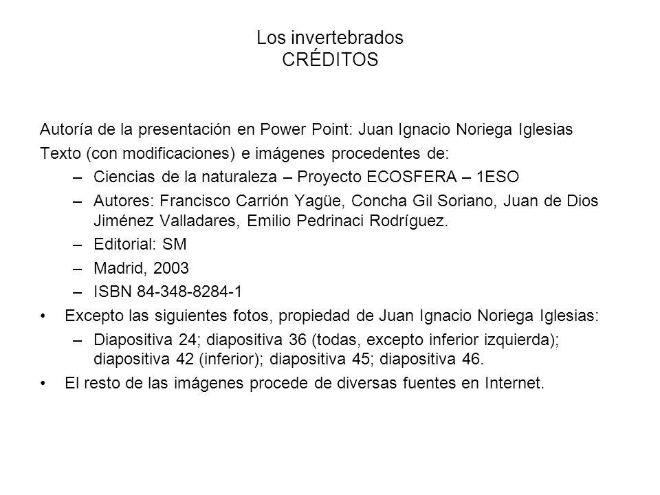 Los invertebrados CRÉDITOS Autoría de la presentación en Power Point: Juan Ignacio Noriega Iglesias Texto (con modificaciones) e imágenes procedentes
