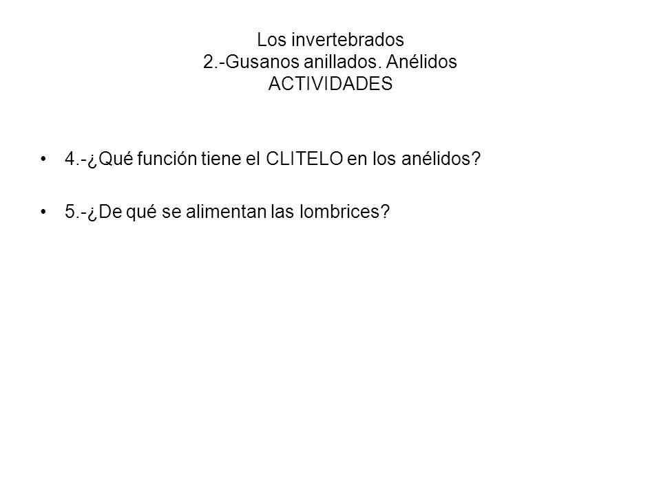 Los invertebrados 2.-Gusanos anillados. Anélidos ACTIVIDADES 4.-¿Qué función tiene el CLITELO en los anélidos? 5.-¿De qué se alimentan las lombrices?
